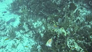 Snorkeling off Key Largo